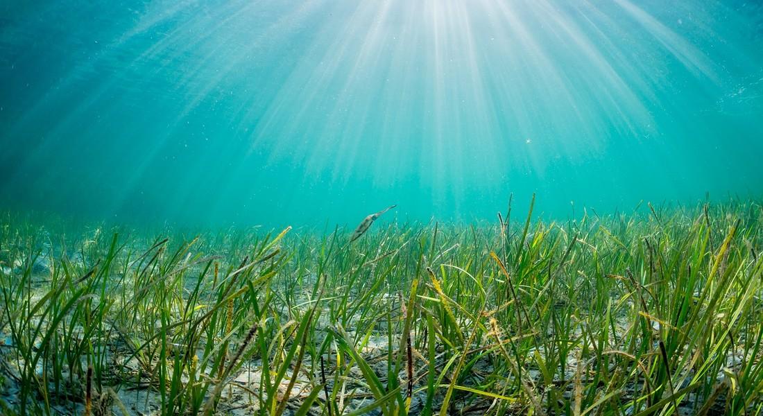 profondità marine: i nuovi rimedi beauty foto iStock. © Ansa