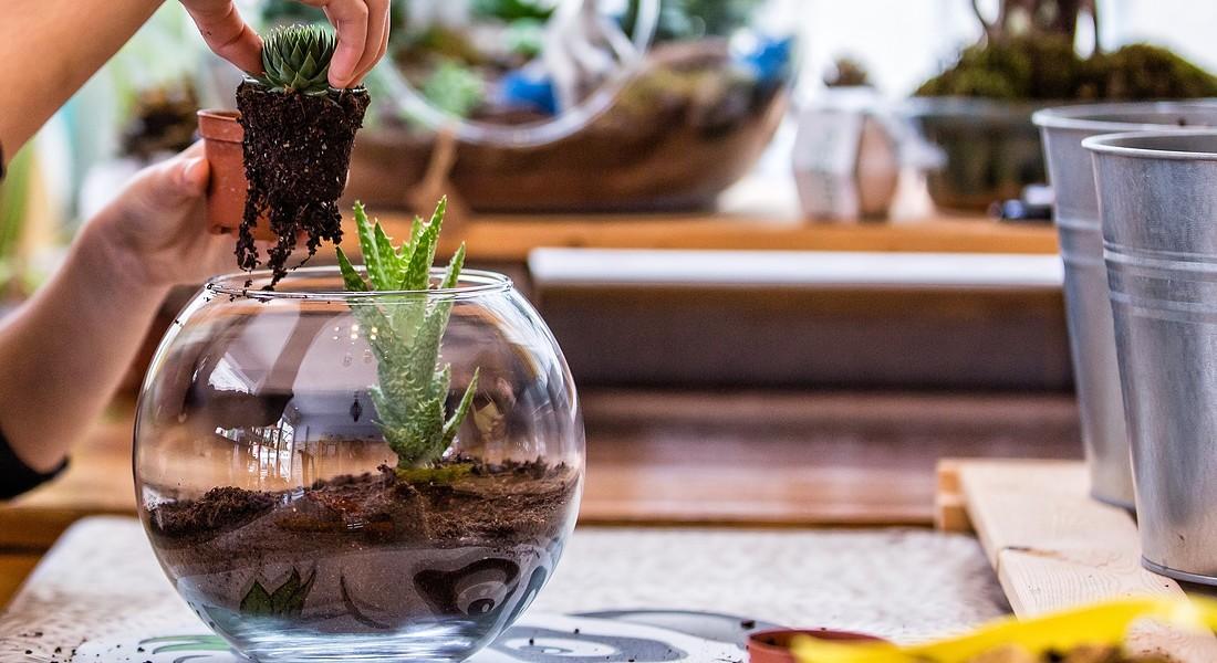la realizzazione di un terrarium foto iStock. © Ansa
