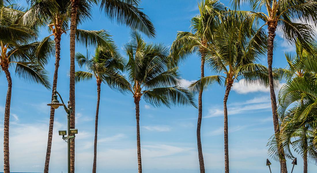 Waikiki Beach - Hawai foto iStock. © Ansa