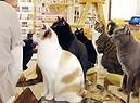 Cat cafe' a Torino (ANSA)