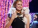 2015 World Dog Awards Paris Hilton accompanied by her Pomeranian dogs, Prince Hilton, (ANSA)