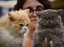 'Super cat show', credit Gianluca Coiro (ANSA)