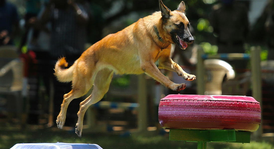 Dog Activity Park for Police Dog Squad in Bangalore © EPA