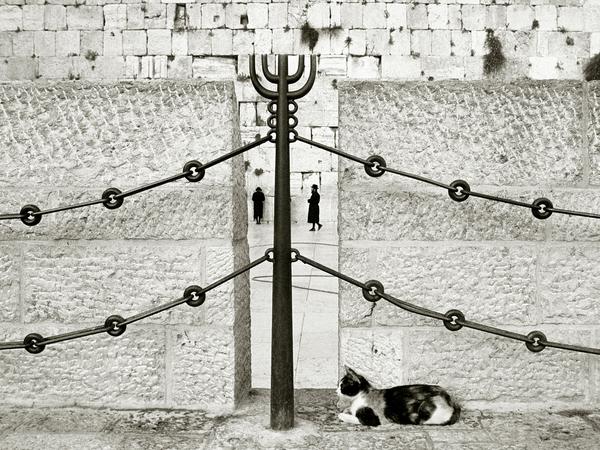 Gerusalemme installa mangiatoie per gatti