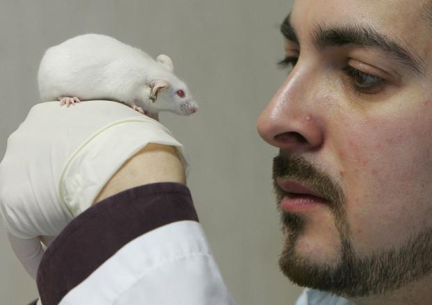 Test su animali non sostituibili © ANSA