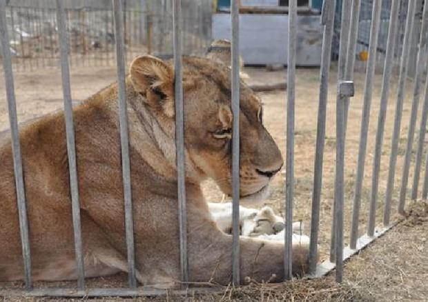 Risultato immagini per animali circo