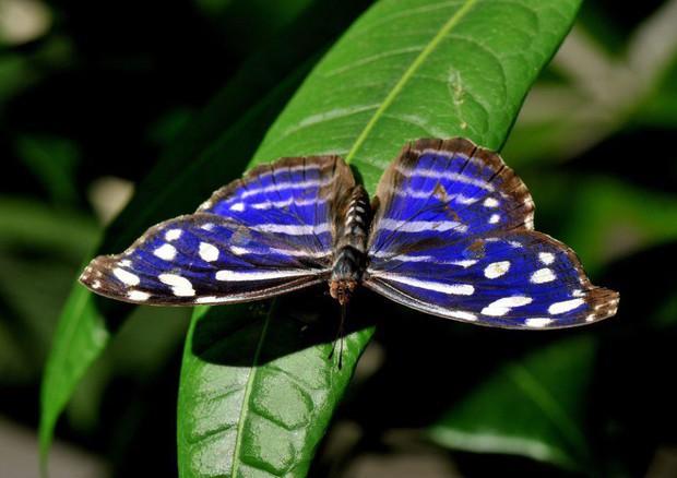 Sos biodiversità, è sotto livello di guardia nel globo © ANSA