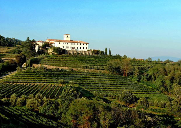 pignolo wine was re-discovered in Rosazzo Abbey