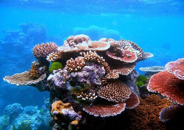 Particolare della Grande barriera corallina (fonte: Toby Hudson) © Ansa
