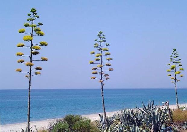 """Più Bandiere blu quest'anno, su 416 spiagge mare """"eccellente"""" thumbnail"""