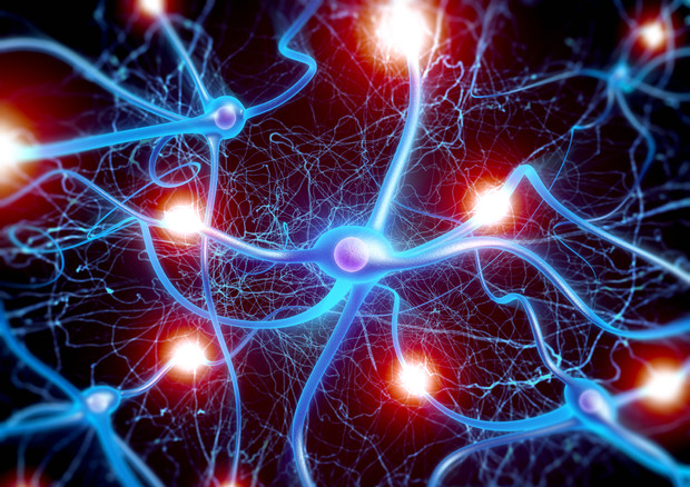 Ecco i neuroni che spengono la fame, rispondono a certi cibi © Ansa