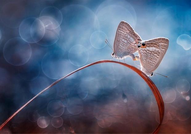 """""""Double Butterflies"""" (fonte: Jianing) © Ansa"""