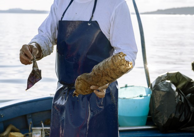 Pescatori a difesa dell'ambiente marino, raccolte 19 tonnellate di rifiuti