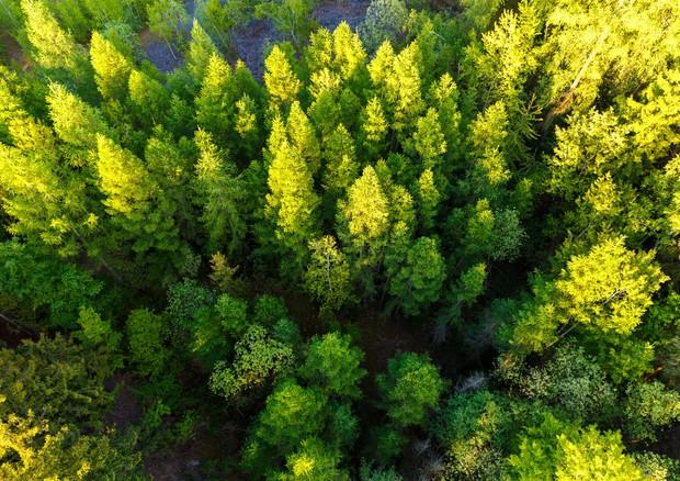 Sulla Terra possibile un nuovo polmone verde salva-clima