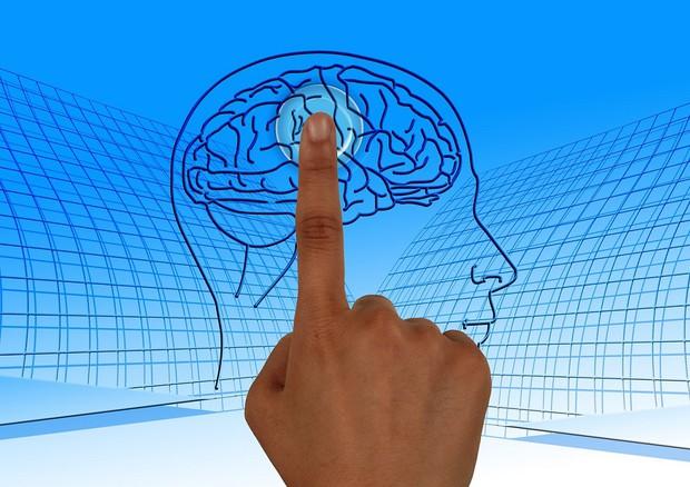 Scoperto nel cervello l'interruttore' che focalizza l'attenzione © Ansa
