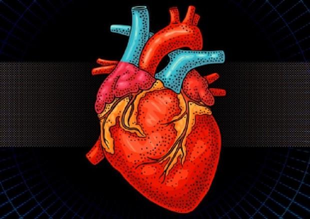Rappresentazione grafica del primo cuore fatto di tessuto biorobotico e biologico (fonte: MIT) © Ansa