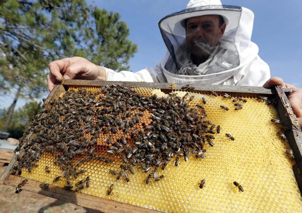 Crolla la produzione di miele fino a -95%. E anche le api soffrono