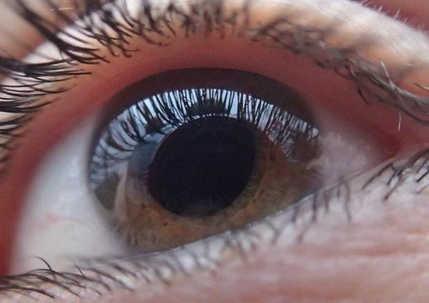 La terapia genica aiuta la rigenerazione del nervo ottico (fonte: TobiasD) © Ansa