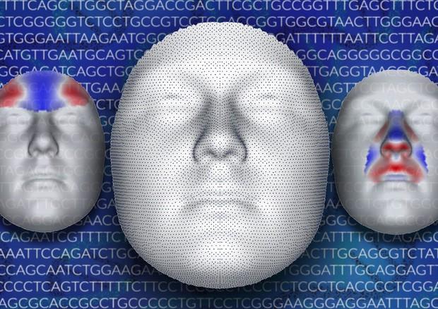 Rappresentazione grafica dell'analisi delle immagini 3D del volto (fonte: Julie White, Penn State) © Ansa