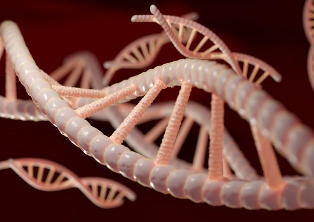 Rappresentazione artistica della molecola a forma di doppia elica del Dna (fonte: Pixabay) © Ansa