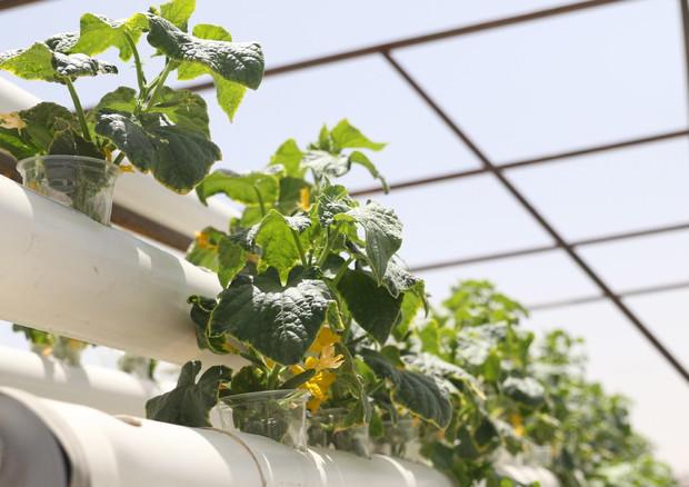 """Innovazione nell'agroalimentare, è nata """"Filiera Futura"""" - Mondo Agricolo -  ANSA.it"""