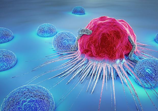 Tumori, scoperto meccanismo che frena le difese immunitarie - Medicina - ANSA.it
