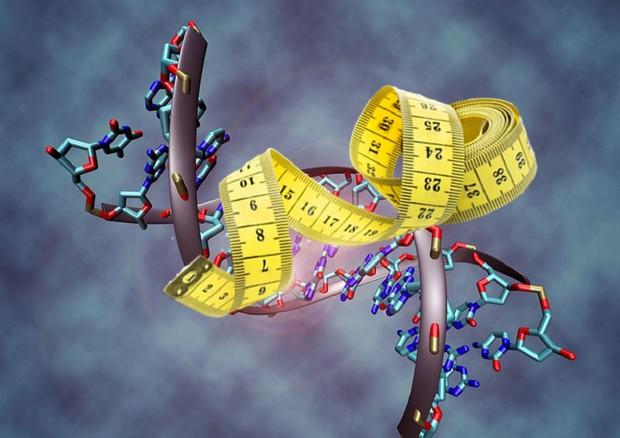 Nel Dna un gene che aiuta a restare magri (fonti: doppia elica di Christoph Bock, Max Planck Institute for Informatics/Wikipedia. metro di Pngimg.com) © Ansa