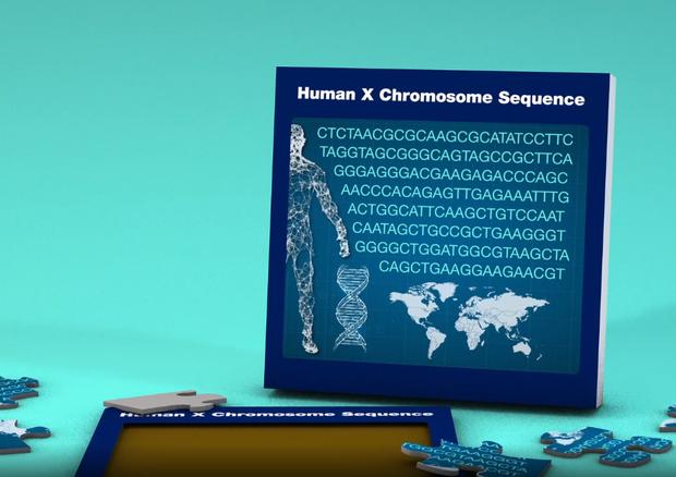 Ottenuto il primo ritratto completo del cromosoma X VIDEO
