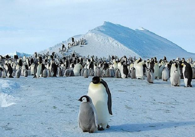 Antartide, scoperte dallo spazio 11 colonie di pinguini
