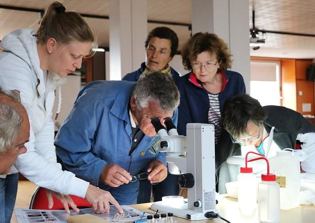 Gruppo di citizen scientist al lavoro (fonte: Anne Le Gars/ Wikipedia) © Ansa