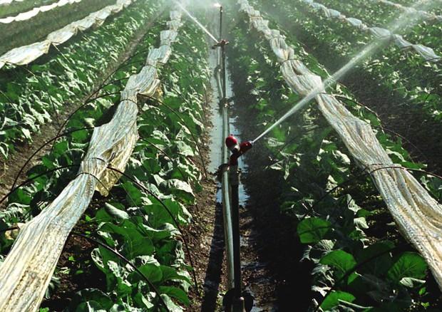 Calcolato il valore globale dell'acqua utilizzata per l'irrigazione © ANSA