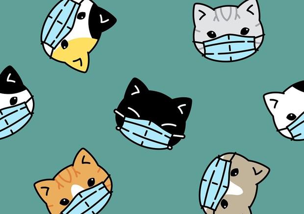 Arriva la prima prova che il sistema immunuitario dei gatti reagisce al nuovo coronavirus (fonte: angiie.toh/Pixabay) © Ansa