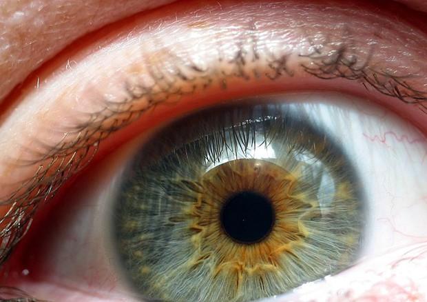 Taglia e incolla Dna promette di correggere malattie retina  (fonte: Flickr) © Ansa