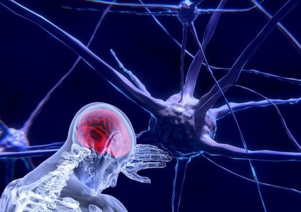 Pronto l'Atlante delle cellule del cervello, per capire meglio molte malattie (fonte: Sabine Zierer da Pixabay) © Ansa