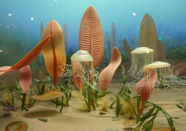 Ricostruzione di un ecosistema marino dell'Ediacarano alla Smithsonian Institution (fonte: Ryan Somma) © Ansa