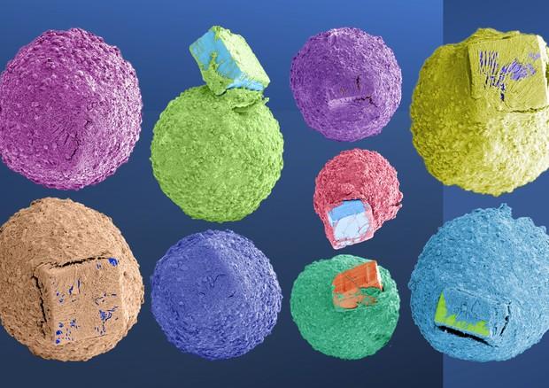 Le immagini degli sferoidi, i cervelli in miniatura, integrati con un dispositivo biologico (fonte: IIT) © Ansa