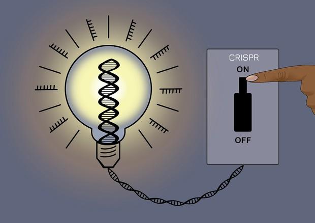 La tecnica CRISPRoff regola l'espressione dei geni senza alterare il Dna (fonte: J. Cook-Chrysos/Whitehead Institute)    © Ansa