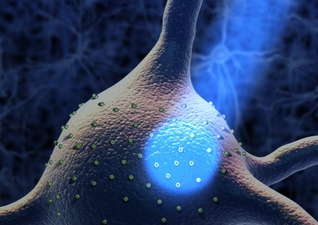 Rappresentazione artistica di una cellula nervosa attivata con la luce (fonte: statenews website, hayadan website, da Wikipedia) © Ansa