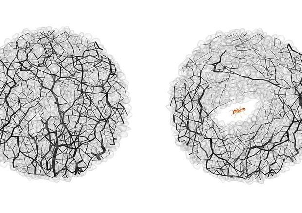 Le formiche usano la fisica per scavare i loro tunnel VIDEO