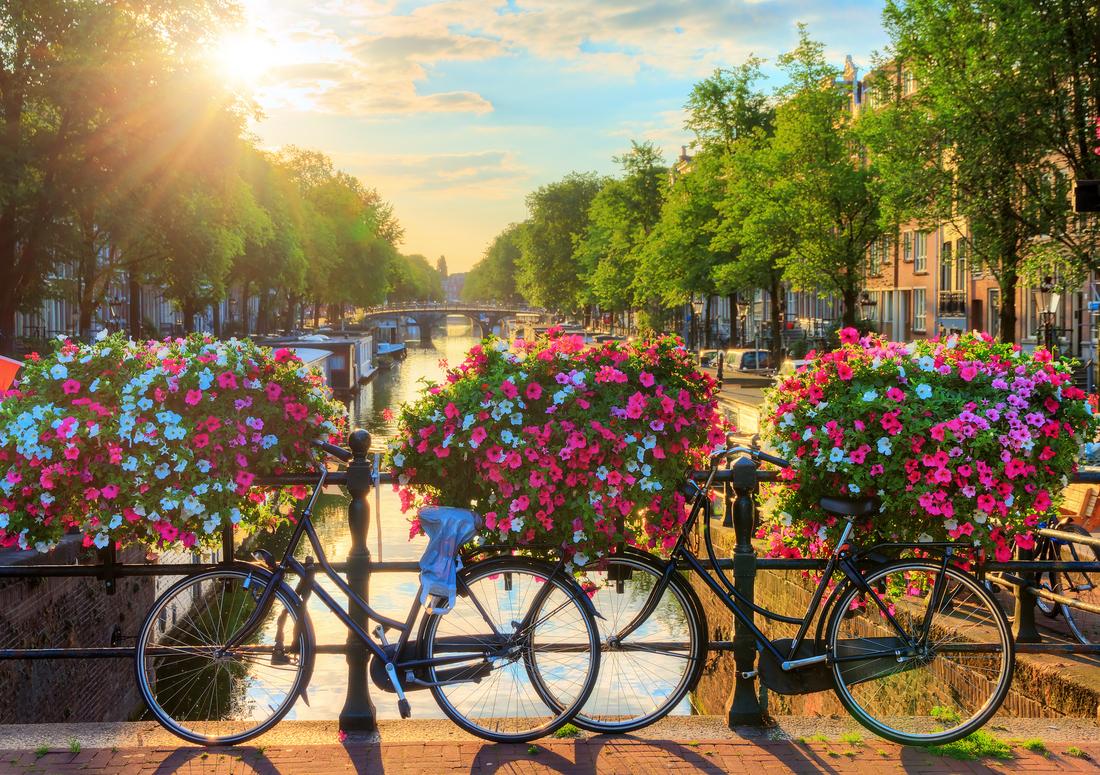 Fiori Da Giardino In Montagna gerani in città il nuovo trend del giardinaggio urbano
