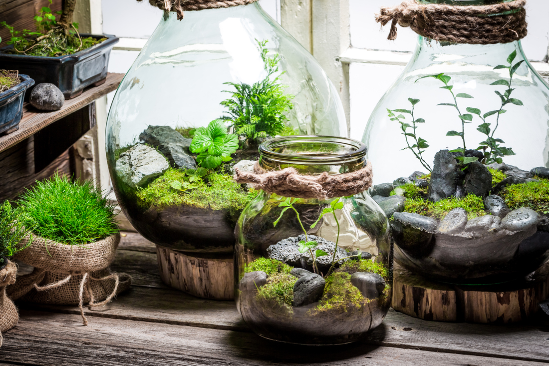 Terrario Per Piante Grasse terrarium, come creare il mini giardino a casa in 5 passi