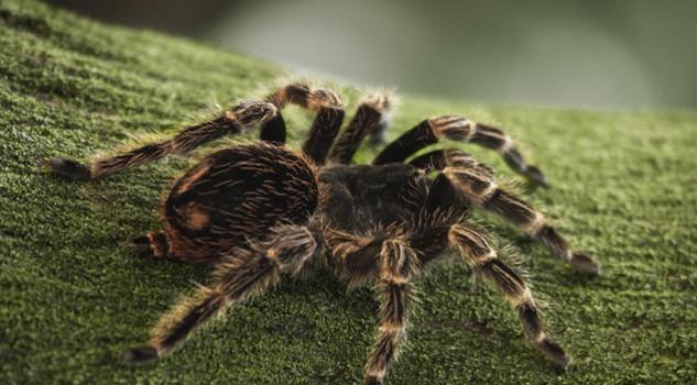 Risultati immagini per animali della foresta tropicale ragni
