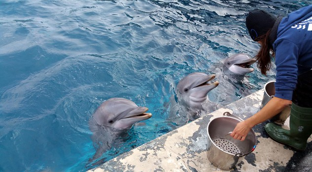 Delfini lamantini squalo tigre e meduse cuccioli dell - Bagno coi delfini ...