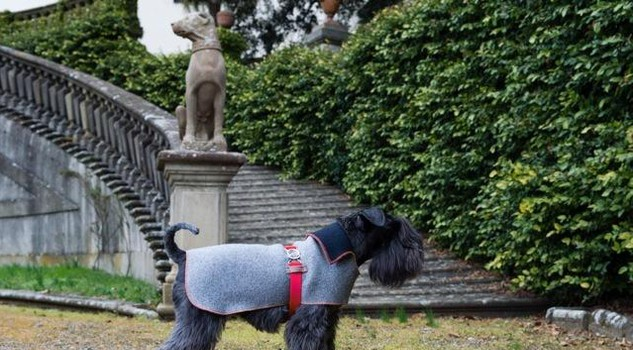Guardaroba Per Cani.Moda Nasce Emma Firenze Il Guardaroba A Misura Di Cane
