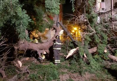 Napoli, il luogo in cui è caduto l'albero (Foto della Polizia Municipale) (ANSA)