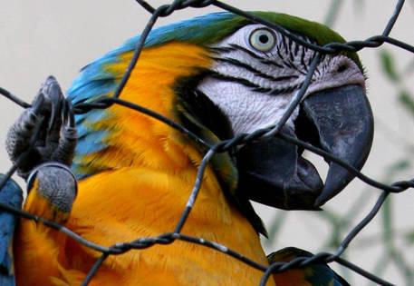 Ladri non trovano soldi, preso pappagallo