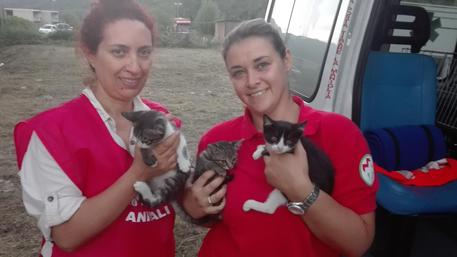 Tre gattini salvati dalle macerie © ANSA