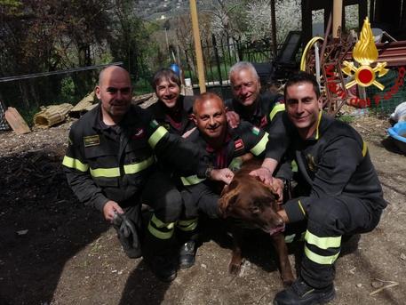 Vigili fuoco salvano cane sotto frana