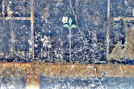 A Pompei il mistero della piccola Mummia - Arte - ANSA