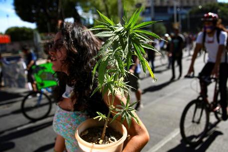 Messico: è legge legalizzazione della marijuana